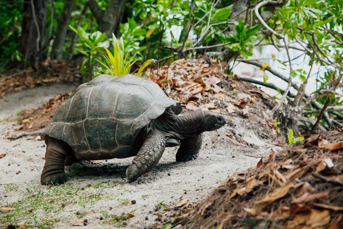 seszele informacje praktyczne żółwie la digue